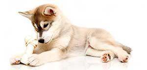 koiran-hemmotteluloma