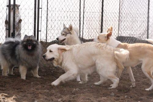kuinka opettaa koira leikkimään